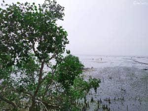 Piknik Asik Plus Explore Hutan Mangrove di Pantai Talang Siring