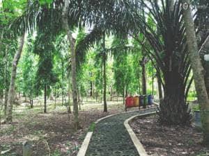 Menjelajah Hutan Kota Malabar, Hutan di Tengah Kota Malang