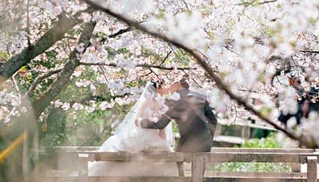 Taman Sakura Kebun Raya Cibodas Gotravelly