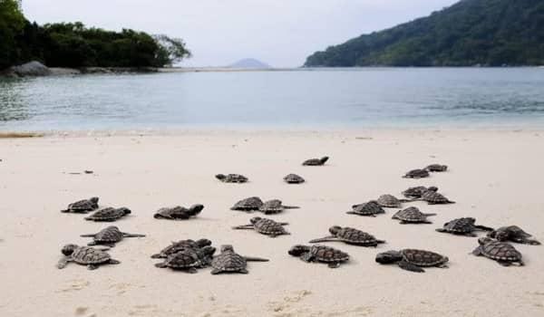 Hasil gambar untuk pulau durai