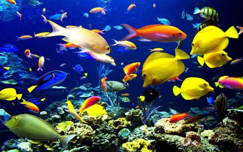 Tempat Wisata Yang Wajib Di Kunjungi Taman Laut Bunaken Di Manado