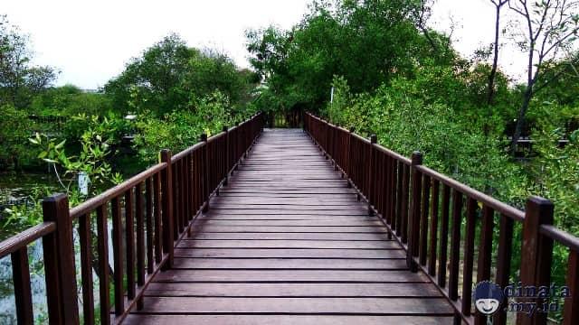 Indahnya Wisata Mangrove Surabaya Rute Lokasi Wisata