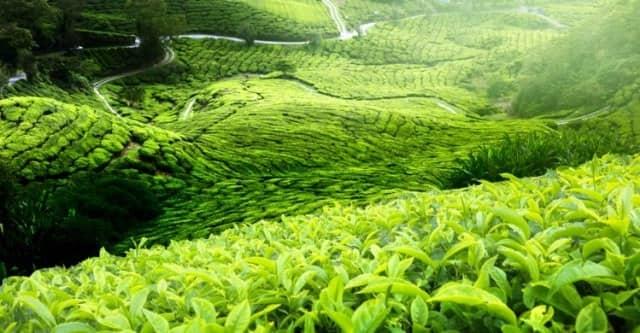 10 Tempat Wisata Di Jember Yang Terkenal Karena Sangat Indah