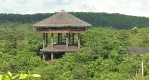 taman nasional orang utan di indonesia