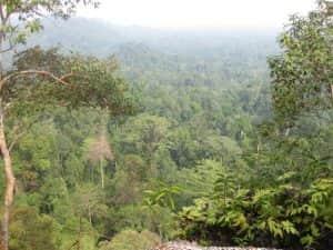 orang utan di indonesia