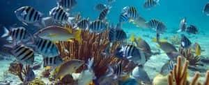 spot diving terbaik di dunia