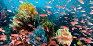 spot diving terbaik di indonesia