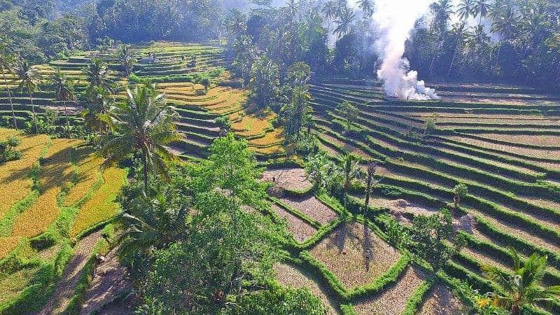 Rice Terrace di Bali