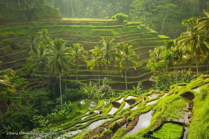 Best rice terrace View in Bali