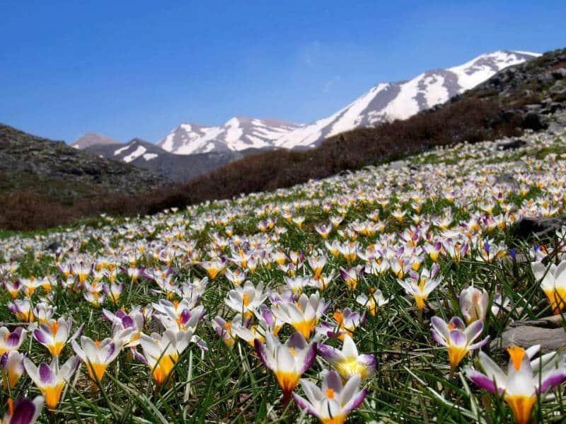 destinasi musim semi terbaik di dunia