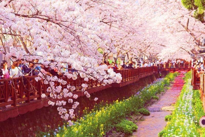 festival musim semi