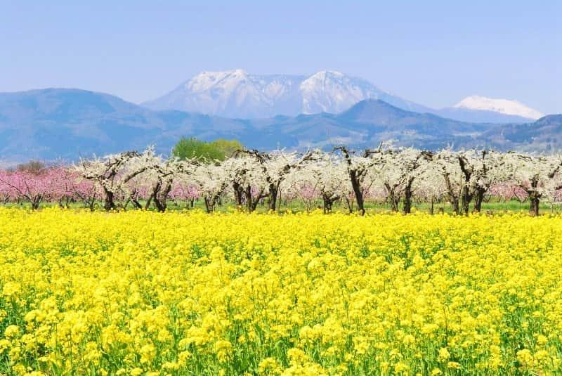 sajian khas musim semi di jepang