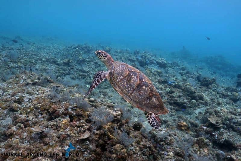 snorkeling di bali