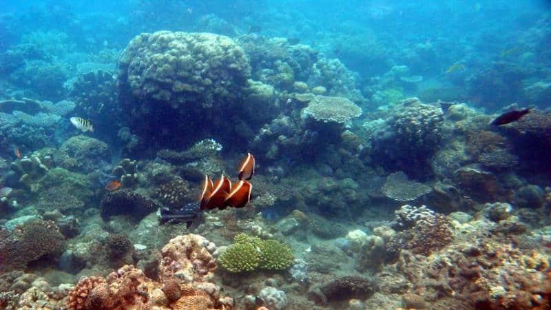 snorkeling terbaik di bali