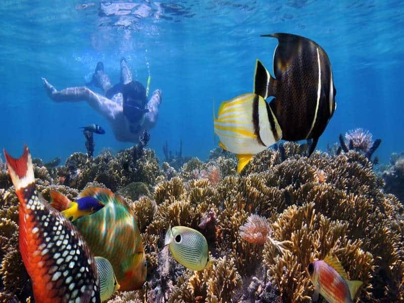 snorkeling di tulamben