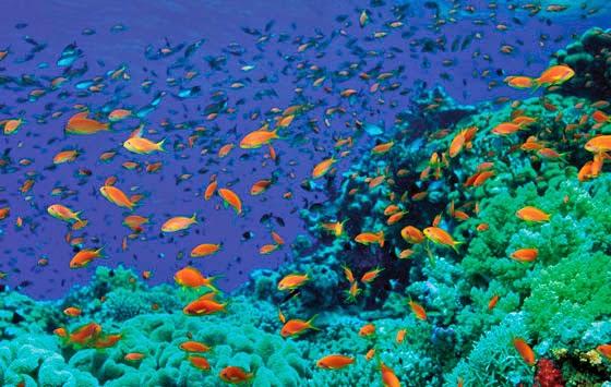 snorkeling terbaik di Lombok