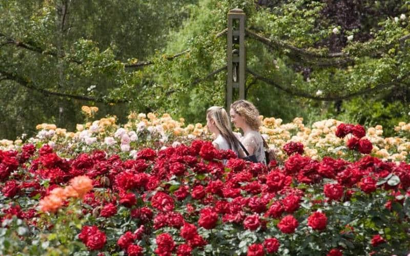 taman bunga mawar di dunia