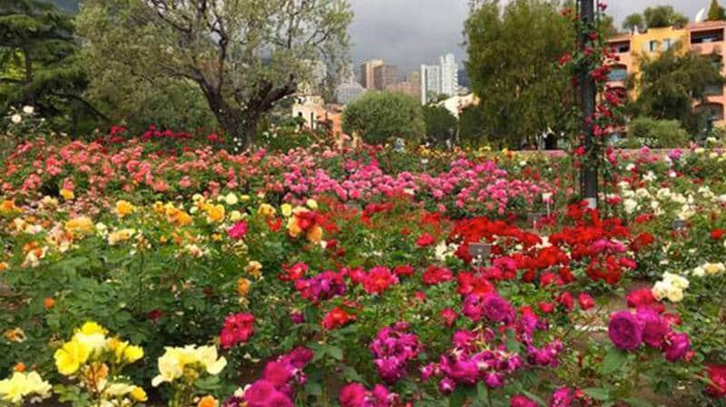 taman bunga warna paling indah di dunia