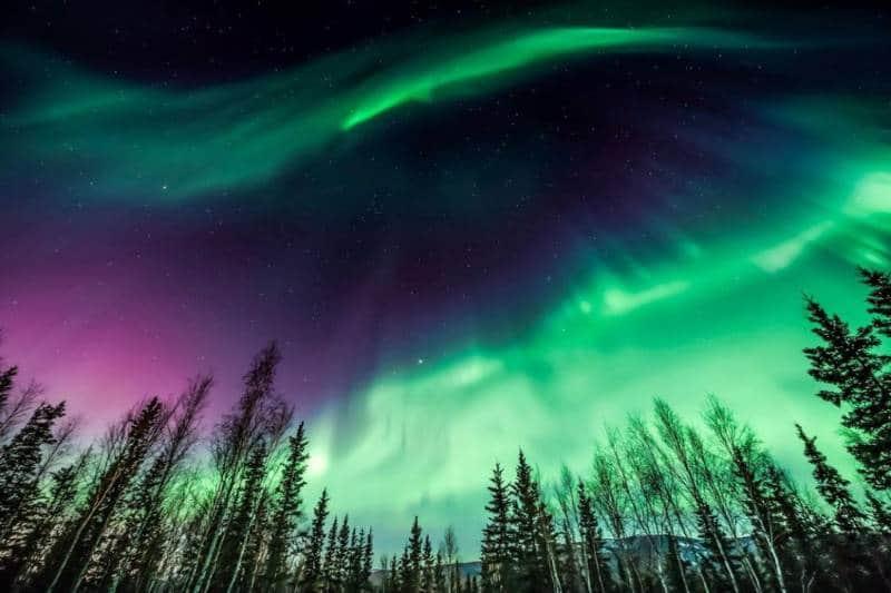 aurora bareilis