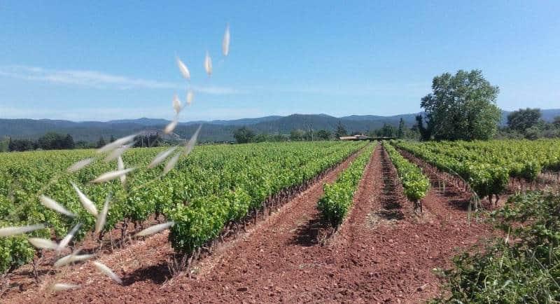 kebun Anggur terindah di dunia
