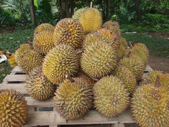 durian enak di Indonesia