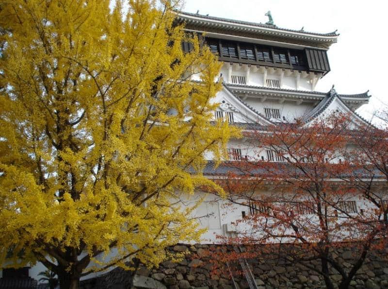 destinasi musim gugur di Asia