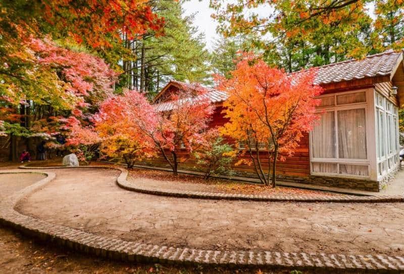 musim gugur terindah di dunia