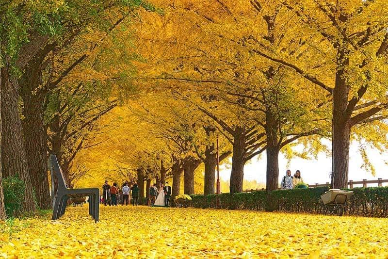 destinasi musim gugur di korea