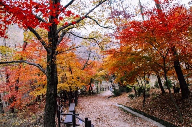 wisata musim gugur di korea selatan