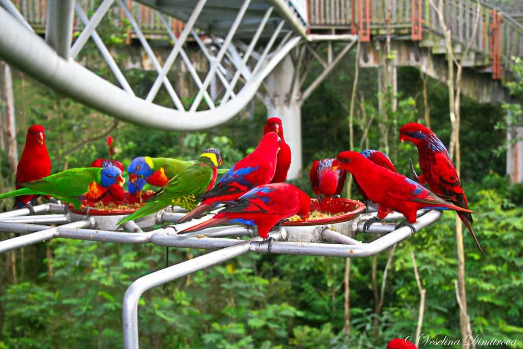 pengaman endemik burung