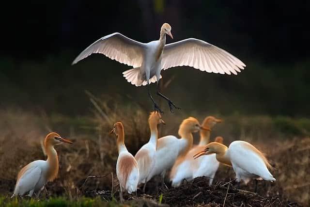 burung endemik dunia
