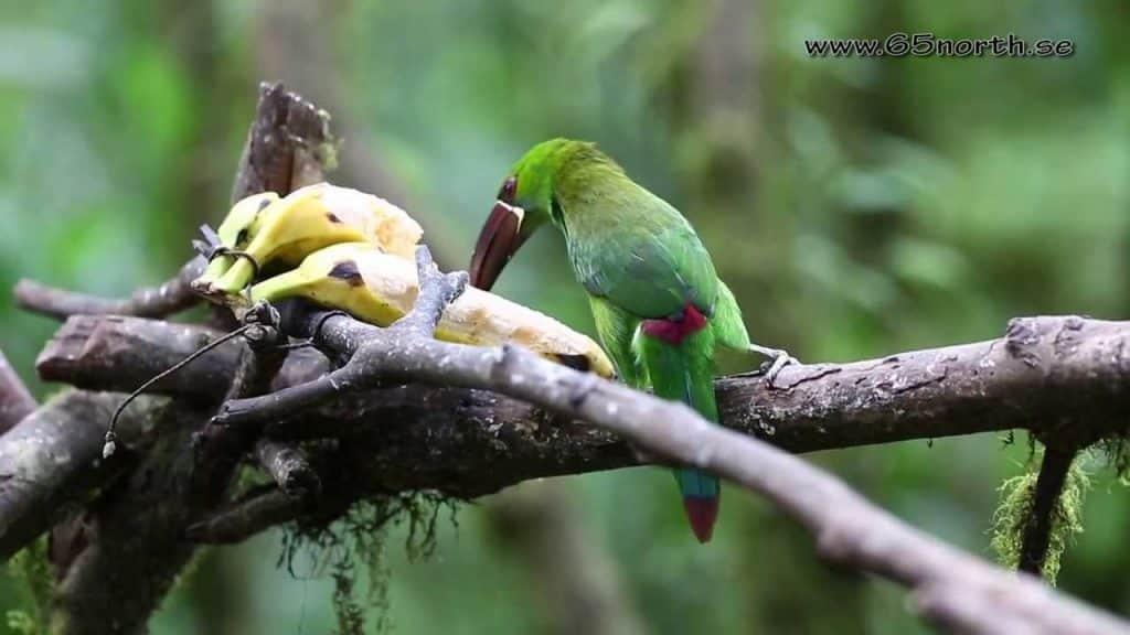 tempat pengamatan burung endemik dunia