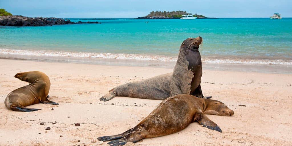 wisata kepulauan galapagos