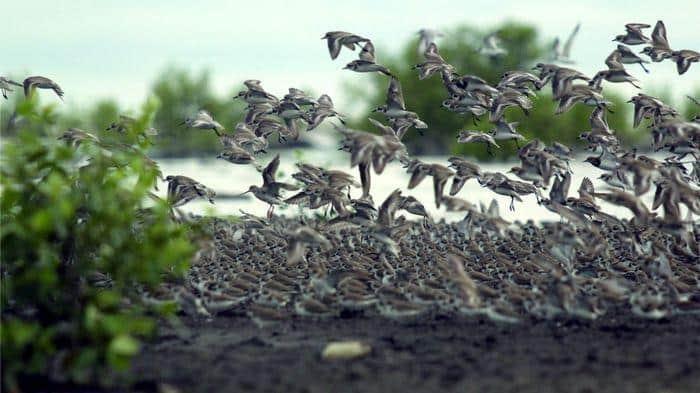burung endenik dunia