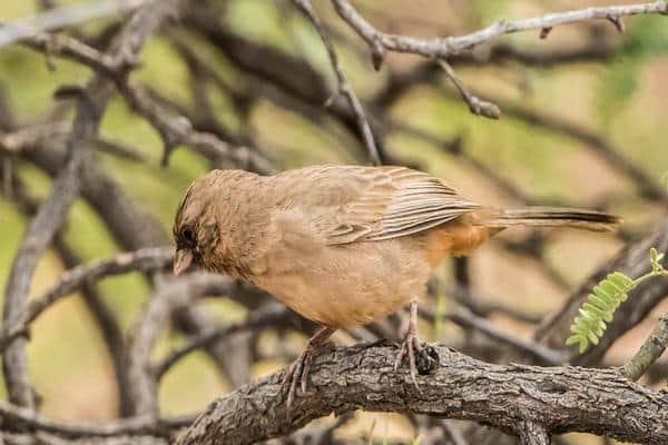 taman nasional endemik burung