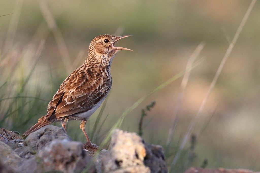 endemik  burung dunia