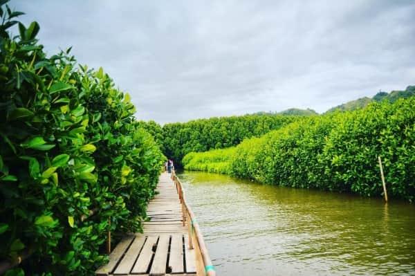 Rindang Pepohonan di 10 Hutan Mangrove Paling Cantik di Indonesia Bikin Pingin Selfie Terus ...