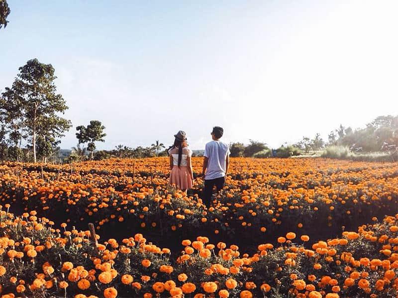kebun bunga gumitir bali