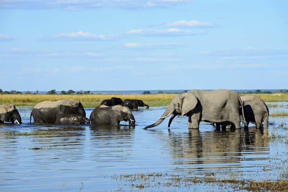 safari melihat gajah di alam liar