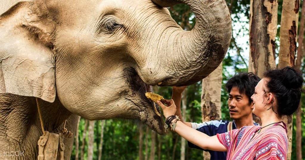 destinasi  melihat gajah di alam liar