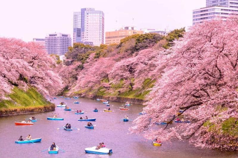 festival hanami japan