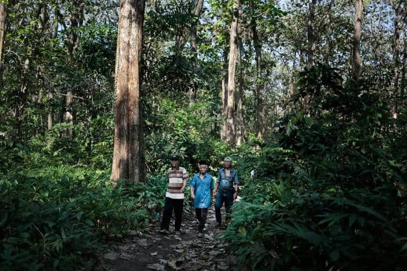 hutan jati petak 45f