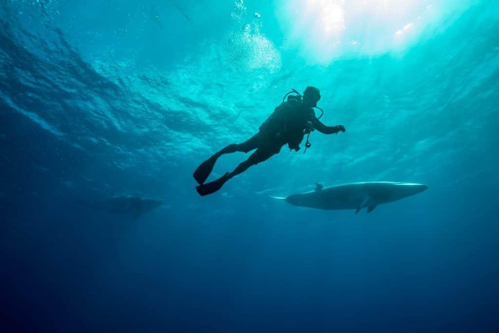 menyelam bersama paus minke