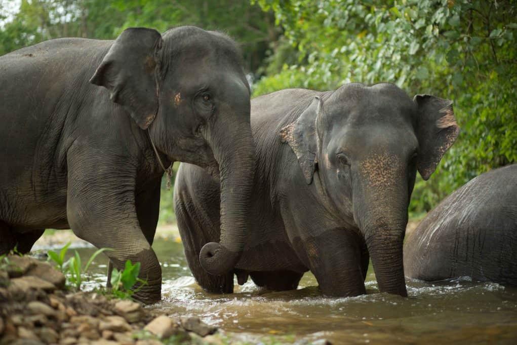 wisata melihat gajah di alam liar