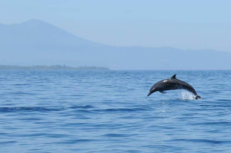 Melihat Lumba lumba di Laut Lepas