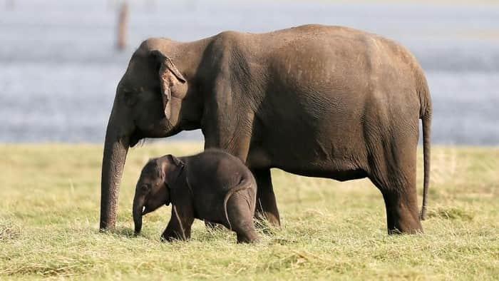 berwisata melihat gajah di alam liar