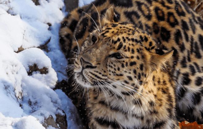 Taman Nasional di Rusia