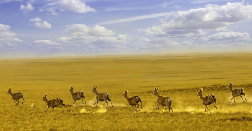 dornod mongolia steppe