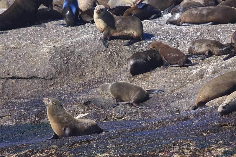 Pulau yang hanya dihuni oleh hewan di Dunia