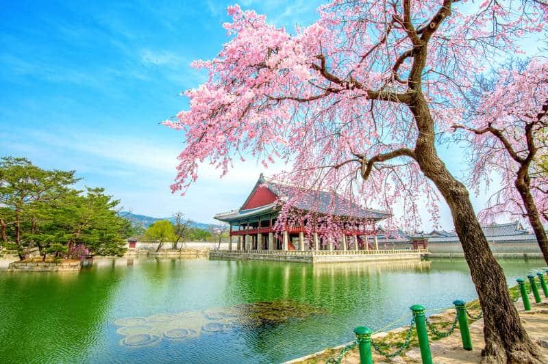 wisata di korea selatan